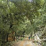 Este Parque Natural posee una rica y variada vegetación. En la imagen, unas encinas dan sombra al viajero.