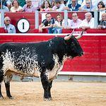 Rubén Pinar - Feria 2017 - XII Premio Samueles Faena más Completa