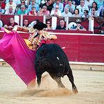 José Garrido en su primer toro con el capote.