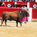 Primer toro de Castella - 10-09-16