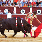 José Tomás levantó al público de sus asientos pero la espada le impidió abrir la Puerta Grande de la Plaza de Albacete.