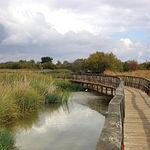 Parque Nacional de Las Tablas de Daimiel, en la provincia de Ciudad Real.