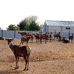 Granja experimental cinegética situada en la Carretera de Las Peñas de Albacete. Entre otras, en esta granja se realizan investigaciones para la mejora en la crianza del ciervo.