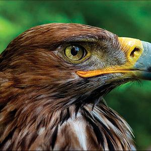 Las poblaciones de gran interés ornitológico son las del Águila imperial ibérica, con varias parejas reproductoras y ejemplares jóvenes.