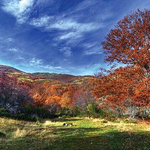 Parque Natural del Hayedo de Tejera Negra, en la provincia de Guadalajara.