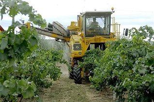 Agricultor. Foto: EFE