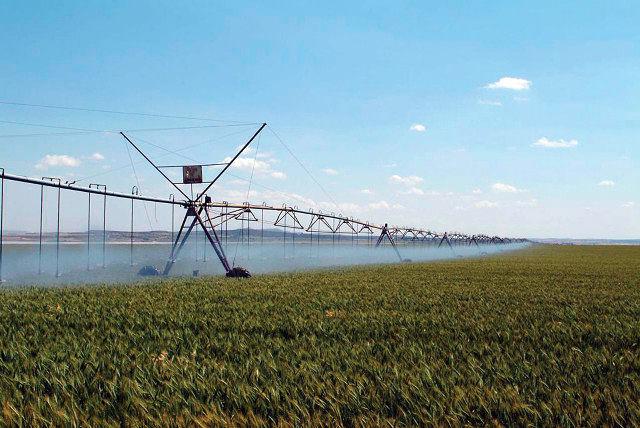 Dehesa de Los Llanos constituye un extenso espacio dedicado a los cultivos propios de la Mancha con estrecha relación con especies mediterráneas.