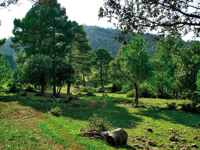 La Cañada de los Mojones se encuentra en el espectacular Parque Natural del Calar del Río Mundo.