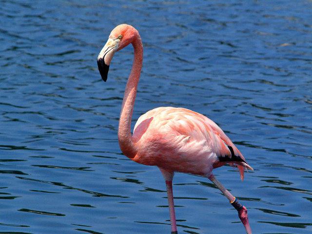 El mantenimiento de la biodiversidad en determinados hábitats es un bien susceptible de valorar y ofrecer a la sociedad por parte de las empresas. Foto: Flamenco en las Lagunas de Alcázar de San Juan (Ciudad Real).