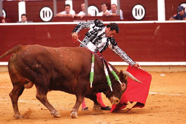 Un toro humilla ante un natural realizado por Manuel Amador. Feria de Albacete 2004. Foto: La Mancha Press.
