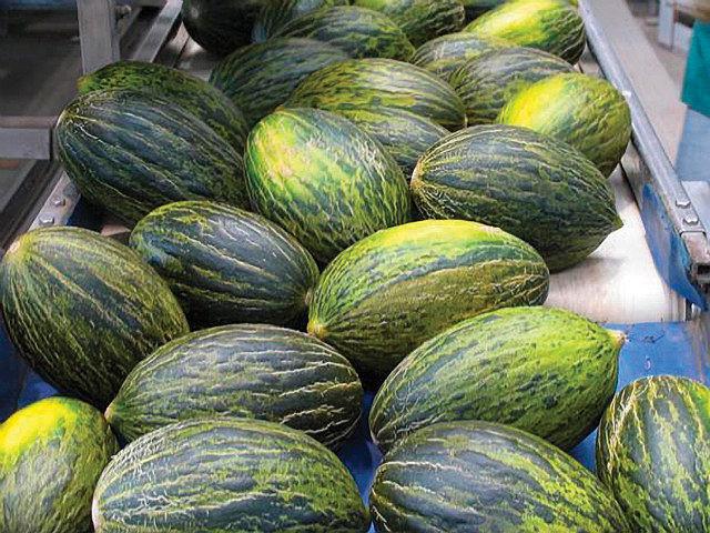 Melones con denominación de origen, todo un placer para los sentidos que podemos deleitar en nuestra ruta por estas tierras de Don Quijote.