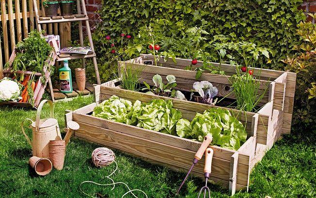 Aprende a crear tu propio huerto en casa noticias de albacete la cerca - Pequeno huerto en casa ...