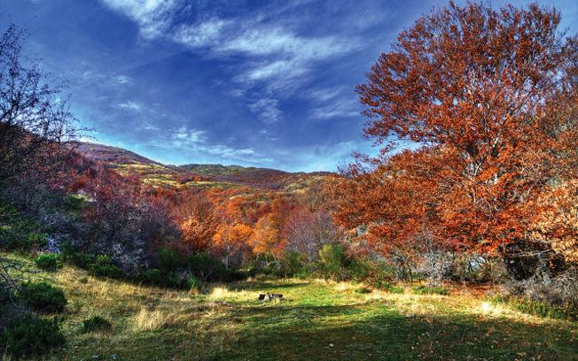 Parque Natural del Hayedo de Tejera Negra, en la provincia de Guadalajara. Foto: José Luis Muñoz Criado - http://www.flickr.com/photos/joselmc/2105277718/sizes/m/in/set-72157594361838324/