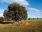 Ocupación del suelo y Sostenibilidad en España