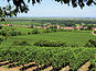 La nueva OCM del vino, esperanza para el sector